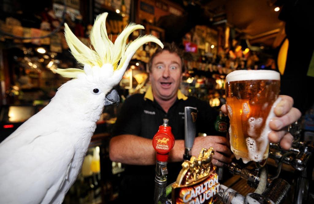 Zeta Bar Sydney,Things to do in Sydney at night